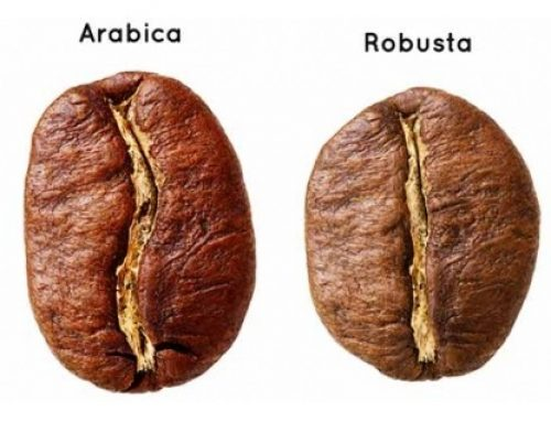 Why is Robusta such a dirty word?