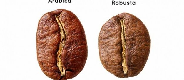 Robusta beans Arabica